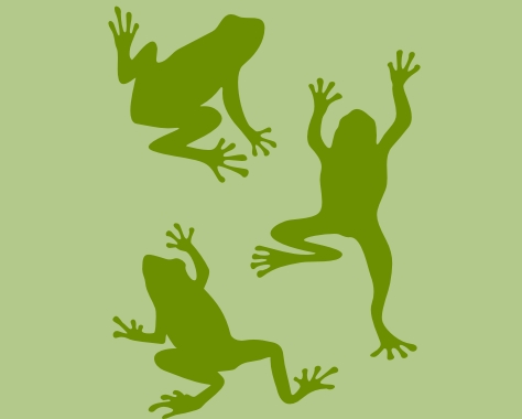 529 Frantic Frogs